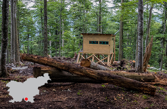 Brown Bear Hide #1